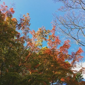 Color changing leaves amp autumn vibes